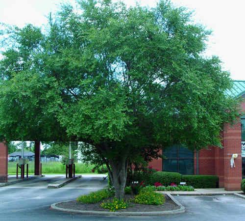 Tree Conservation Scenic America