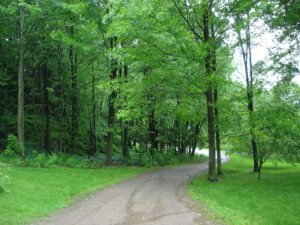 Lush green trees surround a small path. Tree conservation strategies can help keep these trees on this path.