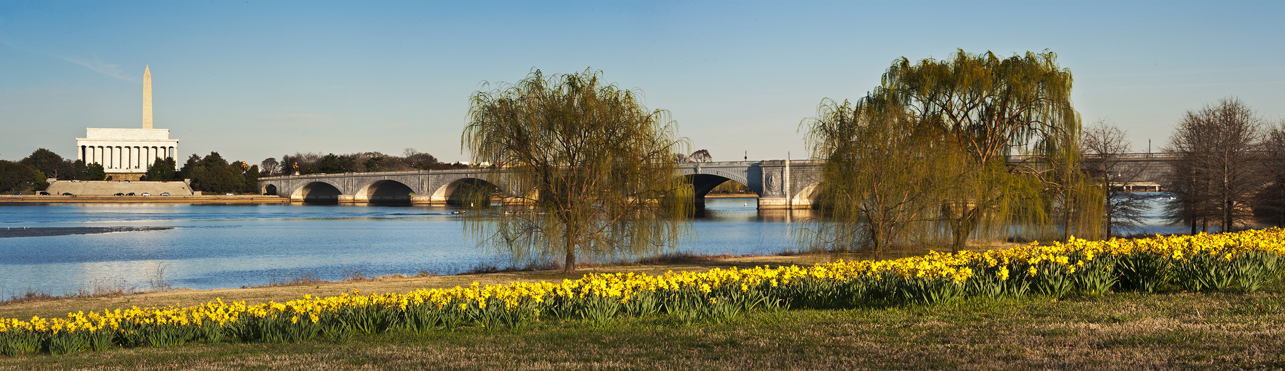 Washington Daffodils Potomac River