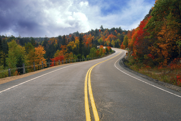Benefits of Tree conservation include keeping beautiful treelined roads. Long winding road runs through orange and green fall trees.